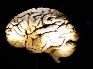 Comment mieux utiliser votre cerveau au bureau (Challenges, février 2014)