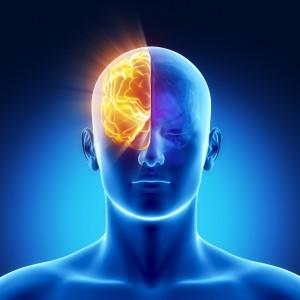Non, nous n'utilisons pas seulement 10% de notre cerveau (Allo-médecins, juillet 2014)