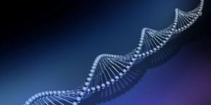 Le fantasme des gènes de l'intelligence (Sciences & Avenir n° 815)