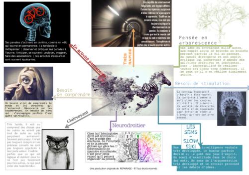 """Infographie """"Le cerveau du grand zèbre"""" (cliquez pour ouvrir en grand format)"""