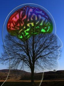 Adultes à haut potentiel : les oubliés de la psychologie (Thinkovery, février 2016)